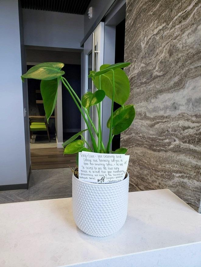 A gift of a beautiful green plant from a dentist in Urbandale and Johnston Iowa